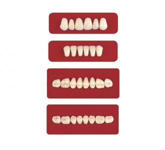 Акриловые зубы Unicryl боковые верхние форма 11 цвет C4 8шт