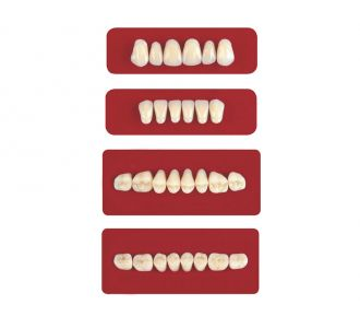 Акриловые зубы Unicryl боковые верхние форма 12 цвет C1 8шт