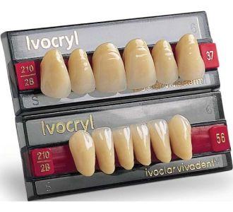 Фронтальные зубы Ivocryl цвет A3, форма 54, низ, 6шт